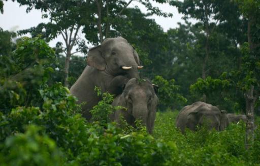 elephants cambodge