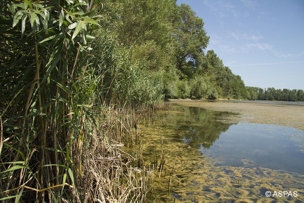 La Réserve des Deux lacs dans la Drome © ASPAS