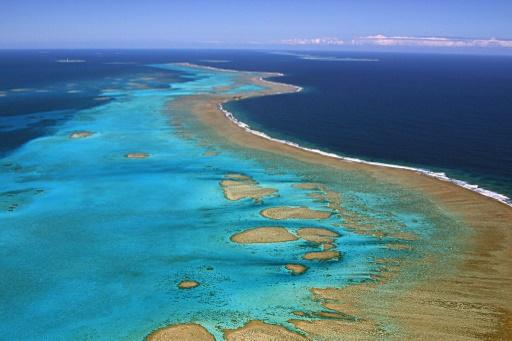 Les coraux de Nouvelle-Calédonie, photographiés en 2005, pourraient souffrir des chaleurs intenses selon les scientifiques © AFP/Archives MARC LE CHELARD