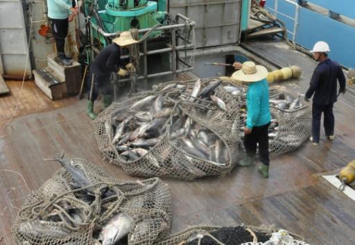 pêche illegale