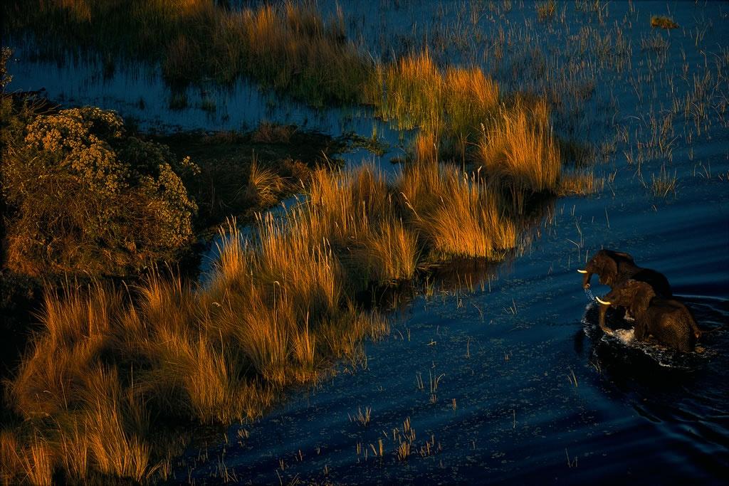 Eléphants dans le delta de l'Okavango, Botswana (19°26' S – 23°03' E)