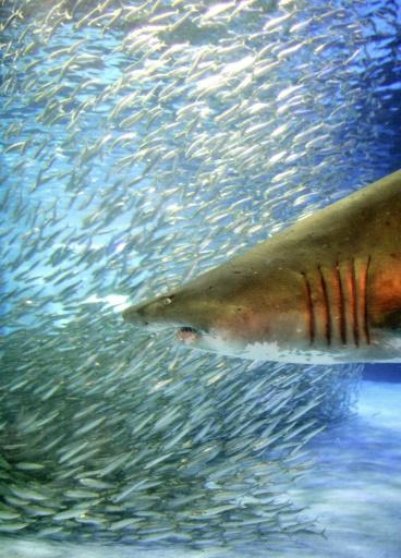 requins au cinéma