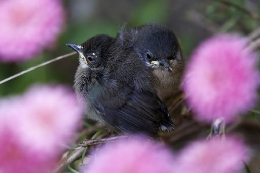 oiseaux nicheurs