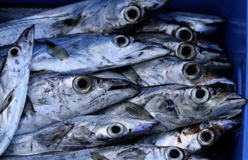 poissons d'eau douce