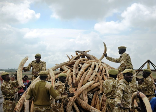 stocks d'ivoire