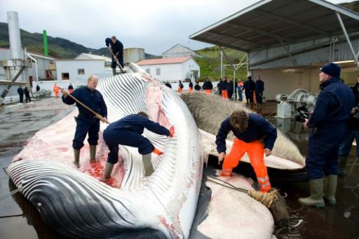 baleiniers