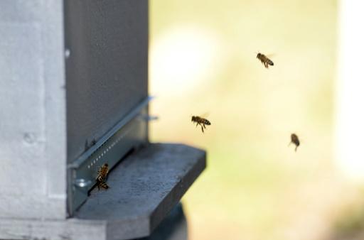 sante des abeilles