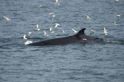 baleines thailande