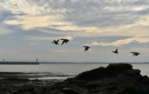 oiseaux miggrateurs