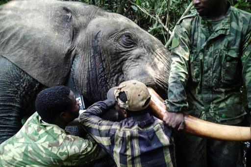 elephants à collier