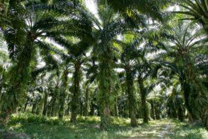total huile de palme