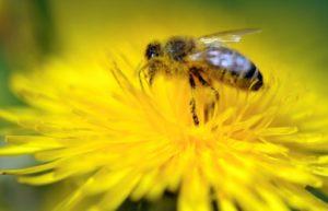 convoi apiculteurs