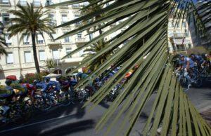 nice palmiers