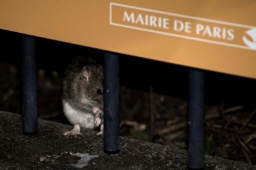rats paris