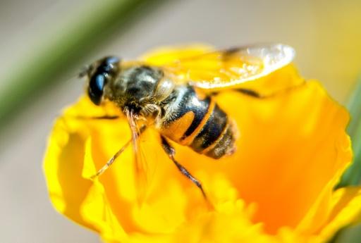 role des abeilles