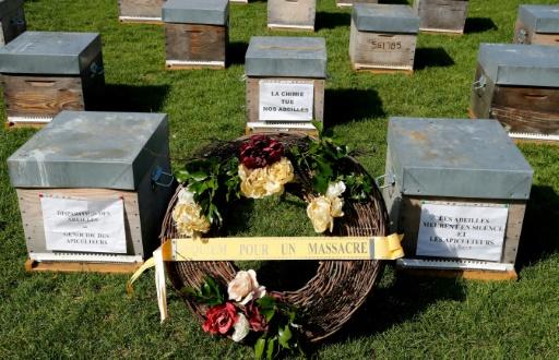 mortalite d'abeilles