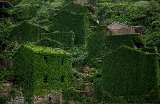 chine nature