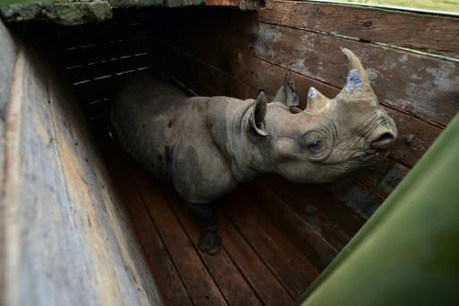 kenya rhino