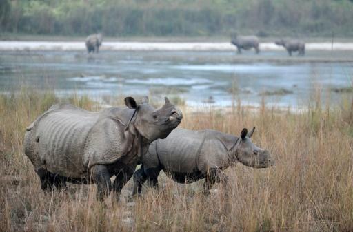 diplo du rhino