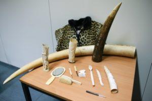belgque ivoire