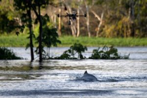 drone dauphin