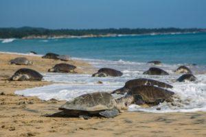 trafic de tortues