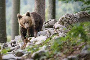 ours slovenie