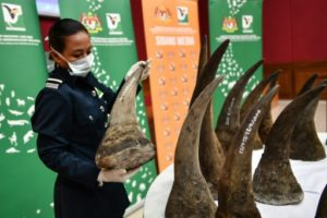 cornes de rhinoceros