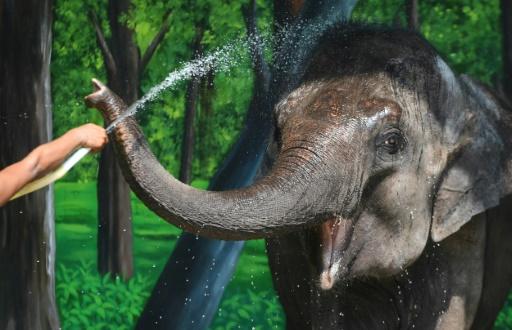 elephants captivite