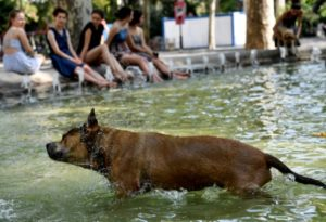 canicule animaux