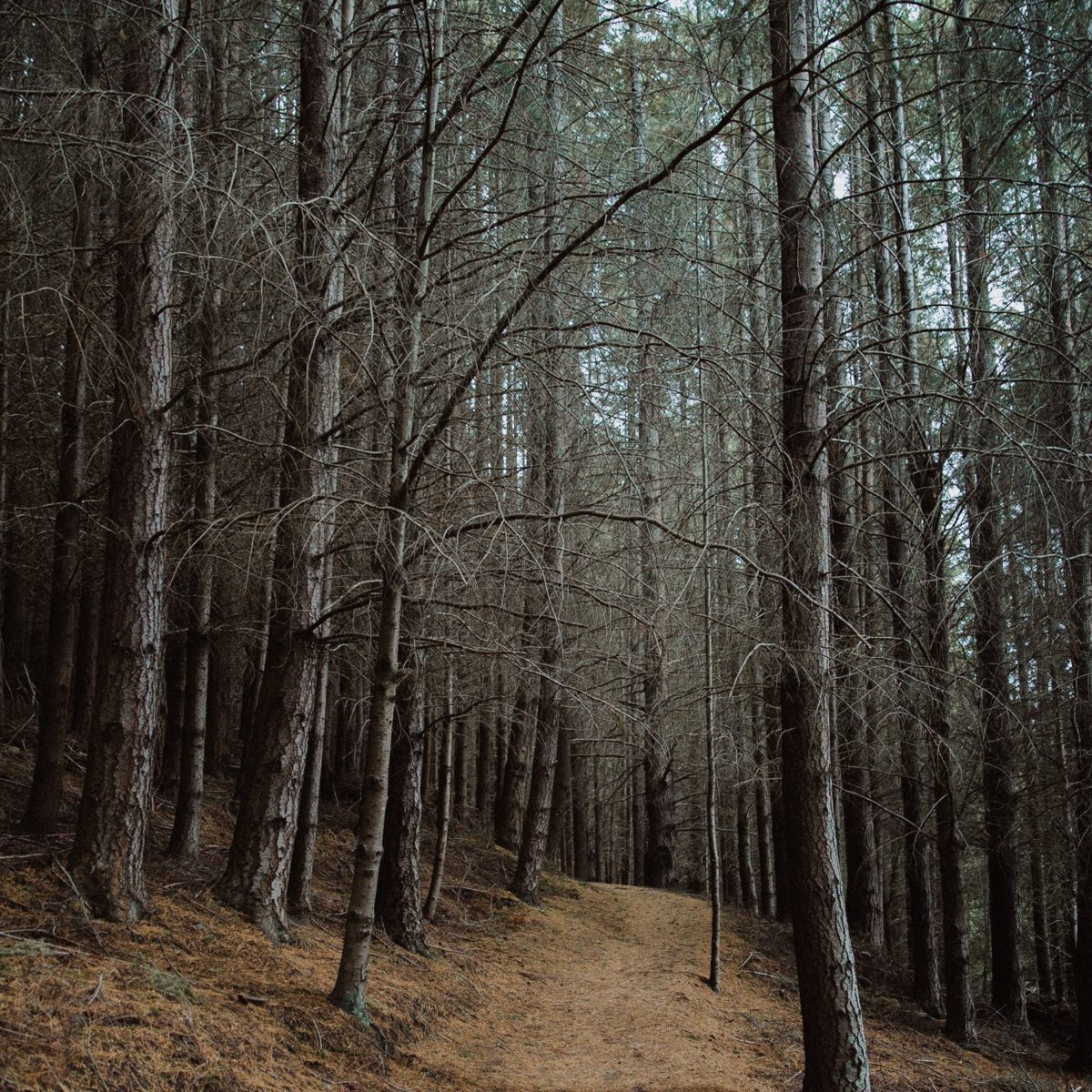 Forêt-bulb-creative-570885-unsplash