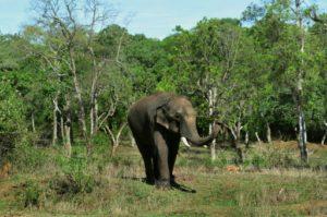 elephants inde