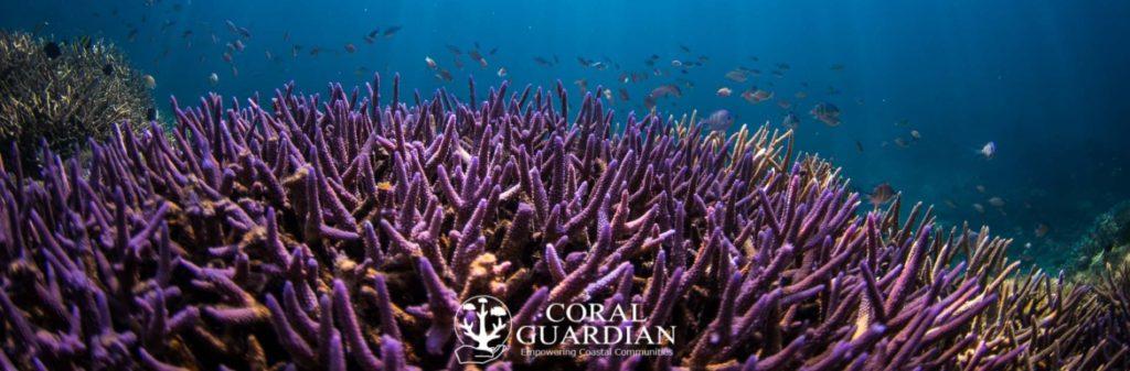 banniere_coral_guardian_