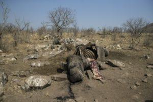 trafiquants de rhinoceros