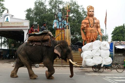 elephants dehli