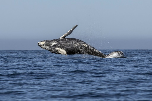 sanctuaire de baleines