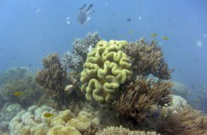 grande barriere de corail