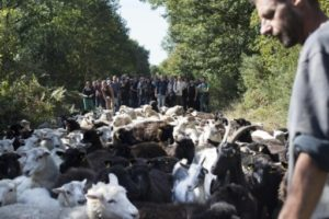 zad agriculture
