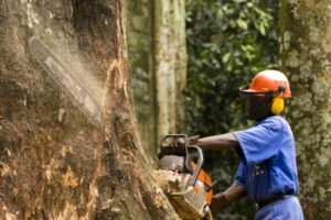gabon forestiers