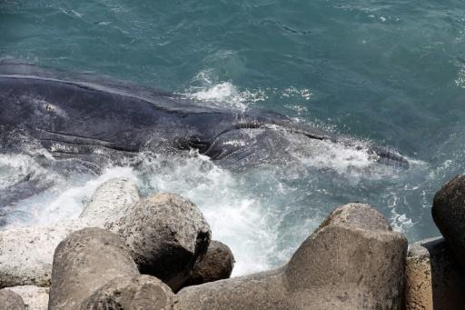 baleine reunion
