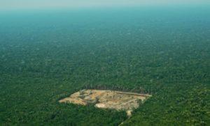 deforestation importee