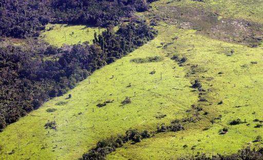 deforestation brésil terrains de foot