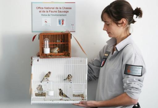 trafic d'oiseaux protégés