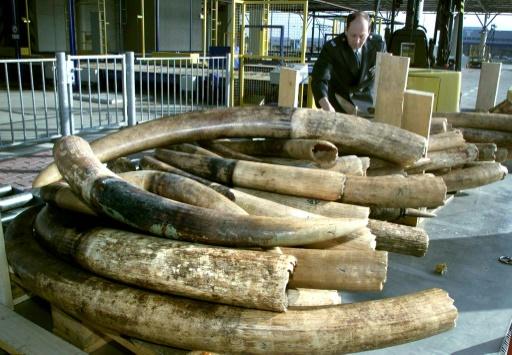 pays bas ivoire