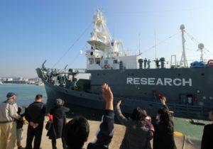 chasse a la baleine reprise japon