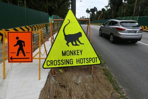 singapour projets ecotouristique écologistes
