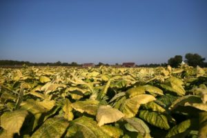 OGM illinois