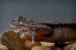 romeo grenouille juliette