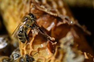 dijon ecole d'apiculture arnaud montebourg