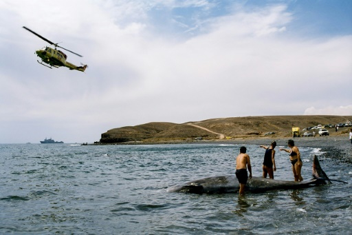 baleine à bec sonars militaires